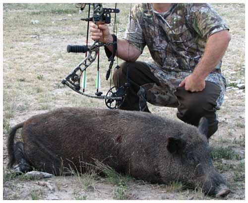 Feral Hog Hunted by Bow!