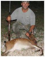 Sika Deer w/ Hunter